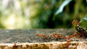 mieren bestrijden onder tegels